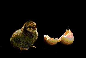 Eggs02