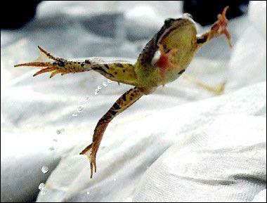 Frog_jumping