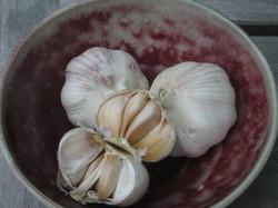 Garlic_20060509_026